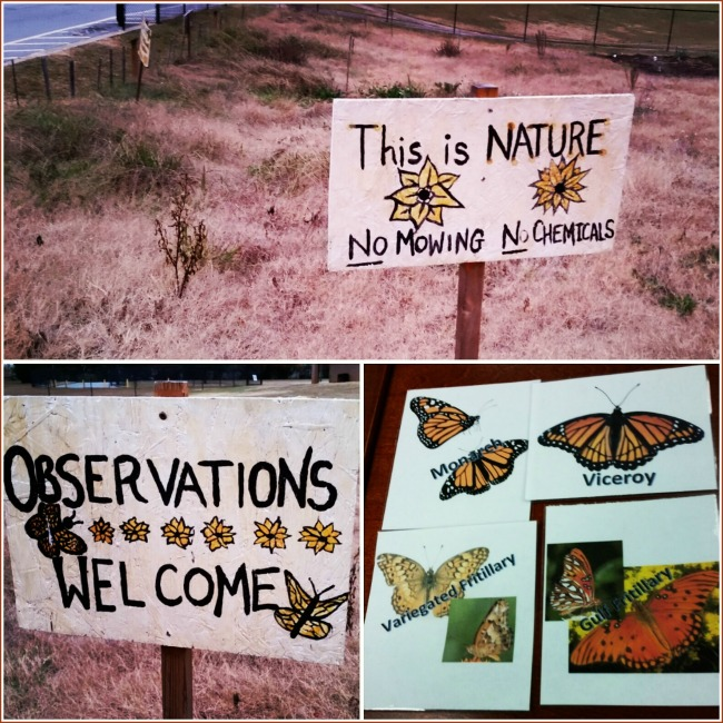 Once you get a glimpse of this extraordinary project--Monarchs and Migration--I think you'll want to join in too. More citizen scientists are needed!