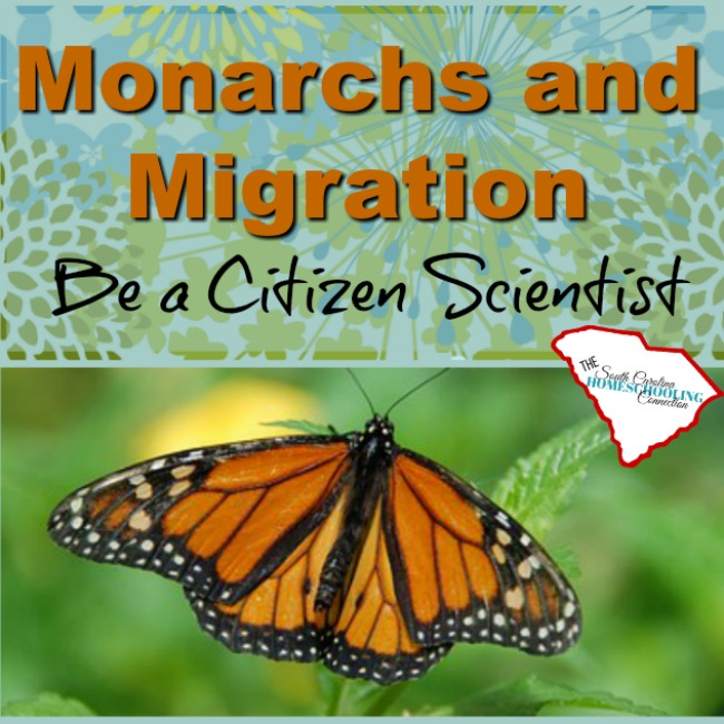 Monarchs and Migration: Become a Citizen Scientist